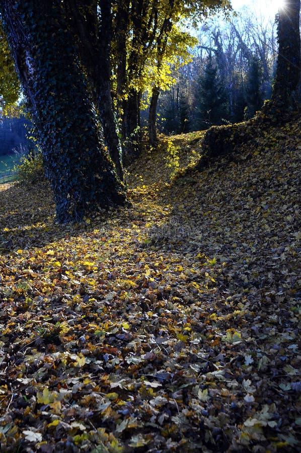 Folhas e árvores de outono foto de stock royalty free