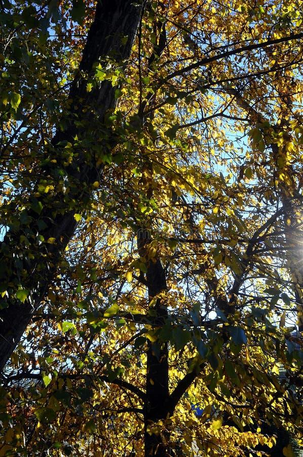 Folhas e árvores de outono fotos de stock royalty free