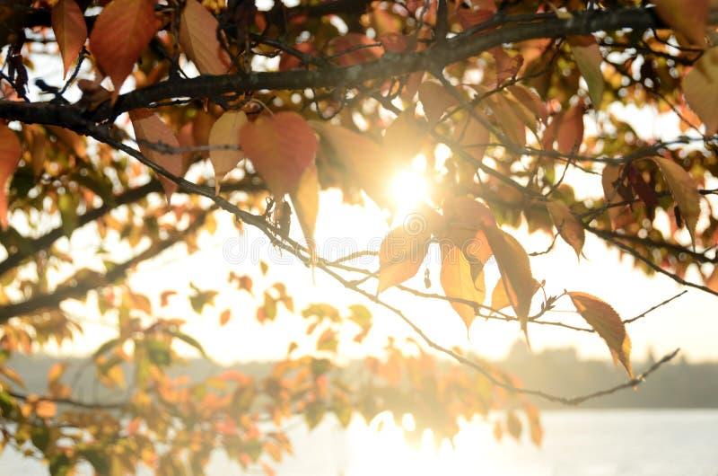 Folhas e árvores de outono fotografia de stock