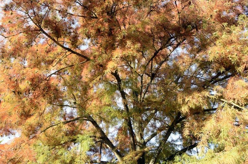 Folhas e árvores de outono fotos de stock