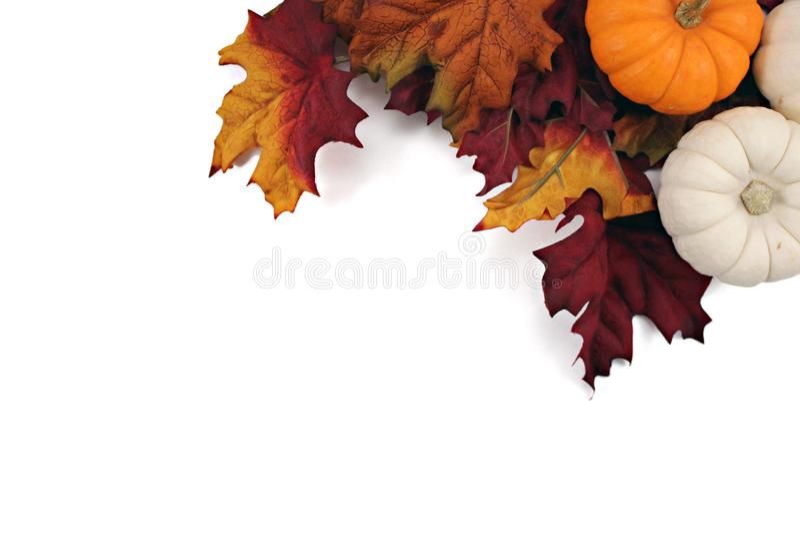 Folhas e abóboras da queda com whitespace imagens de stock