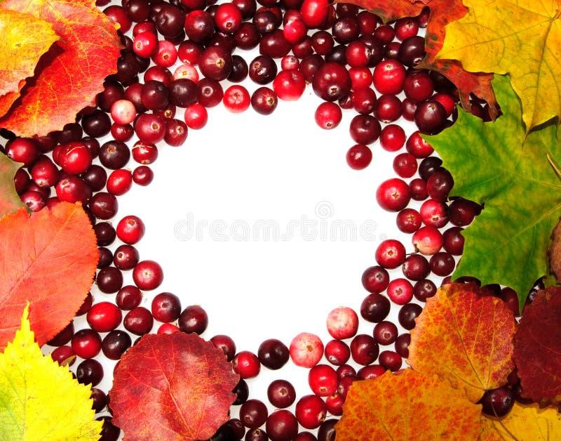 Folhas e airela de outono fotos de stock royalty free