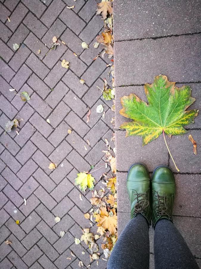 Download Folhas e asfalto foto de stock. Imagem de folha, terra - 80102702
