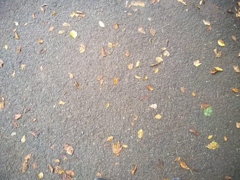 Folhas e asfalto do amarelo fotografia de stock