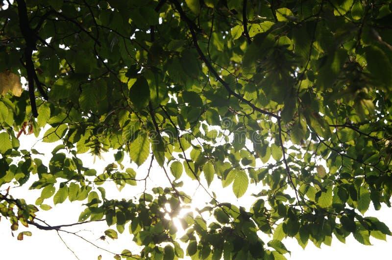 Folhas e céu fotografia de stock royalty free