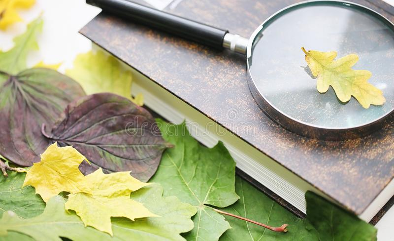 Folhas e chá de outono em uma manta fotografia de stock