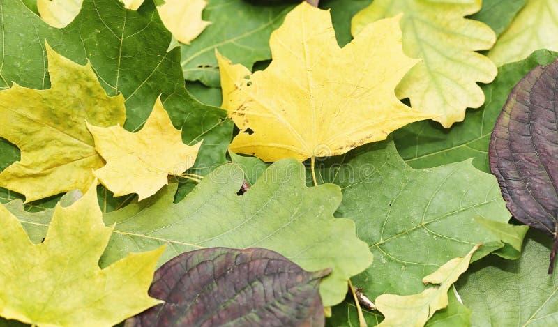 Folhas e chá de outono em uma manta fotografia de stock royalty free