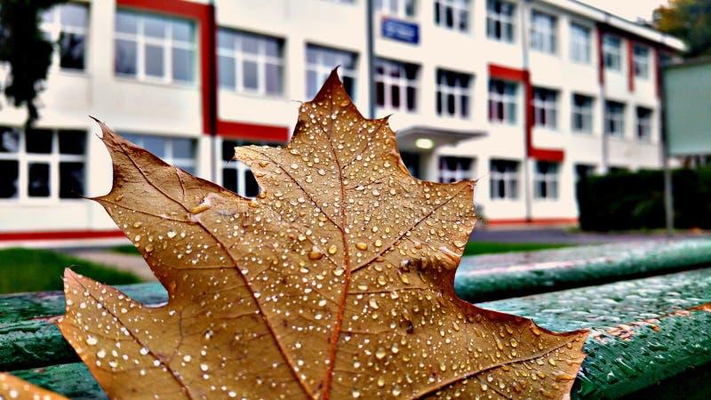 Folhas e escola fotos de stock
