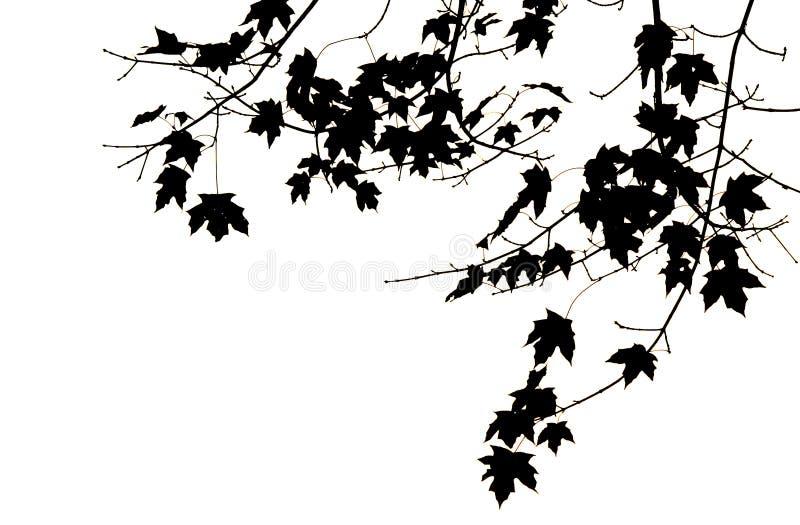 Folhas e filiais ilustração stock