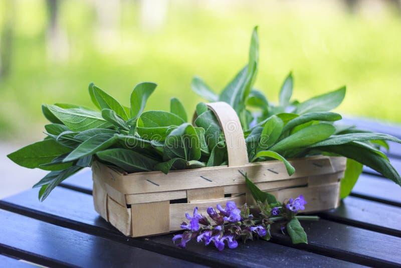 Folhas e flores prudentes frescas em uma cesta imagens de stock