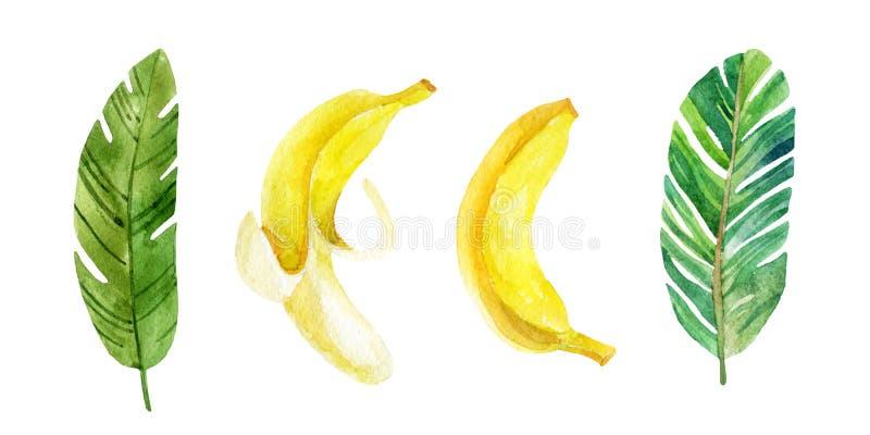 Folhas e frutos da banana no fundo branco ilustração do vetor