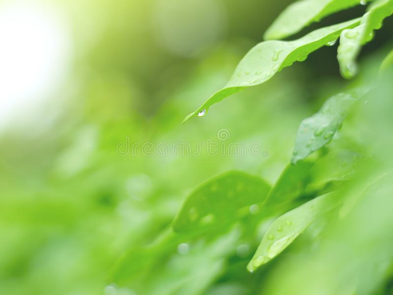 Folhas e fundo verde bonito do waterdrop e textura abstrata para o papel de parede e calmo imagem de stock