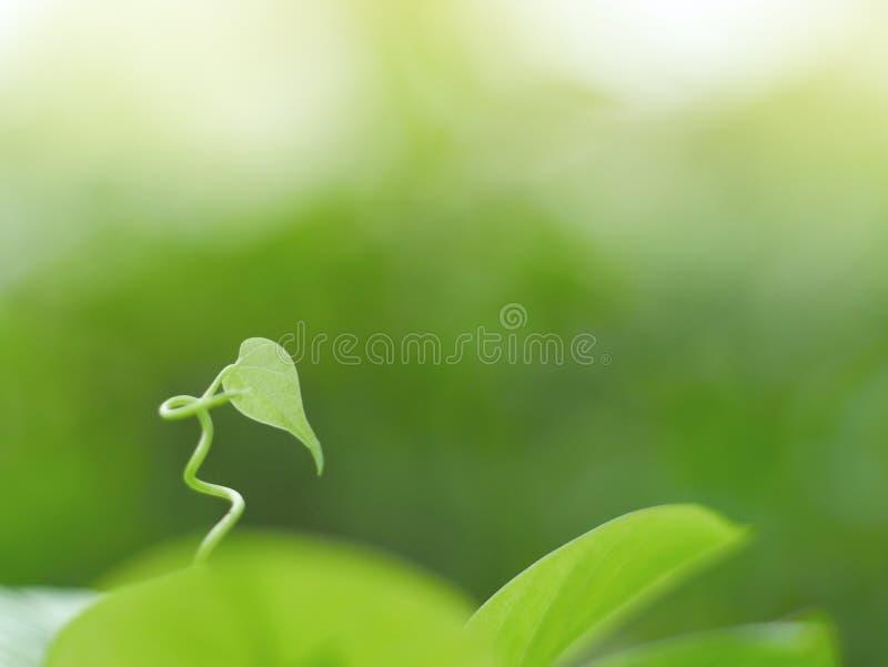 Folhas e fundo verde bonito do waterdrop e textura abstrata para o papel de parede e calmo fotografia de stock royalty free