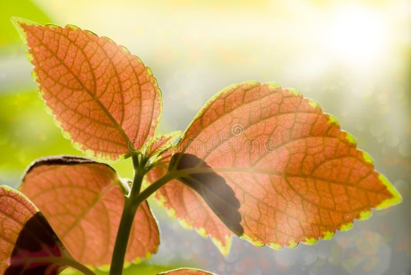 Folhas e luz coloridas de Sun foto de stock