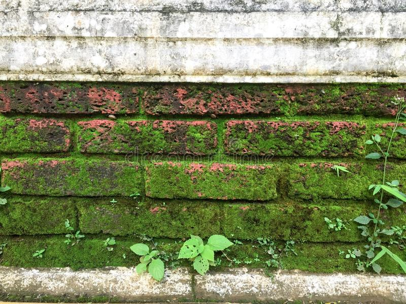 Folhas e musgo fotografia de stock royalty free