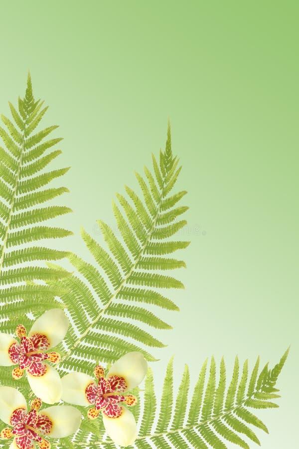 folhas e orquídeas do fern foto de stock royalty free