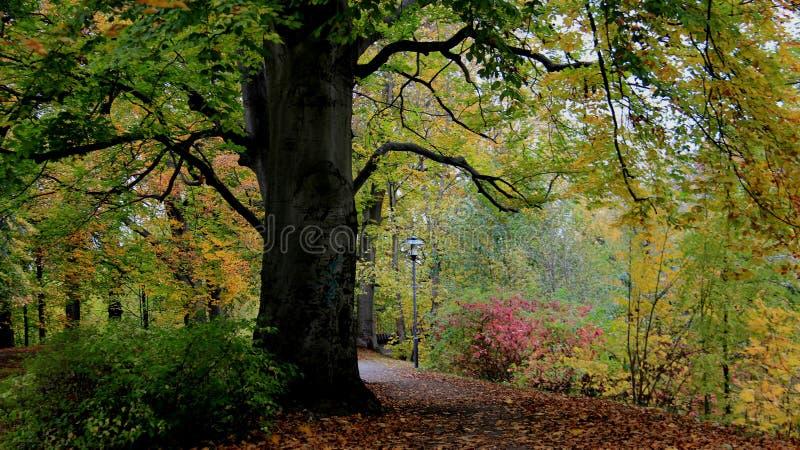 Folhas e passagem de queda coloridas pelo banco de rio foto de stock royalty free
