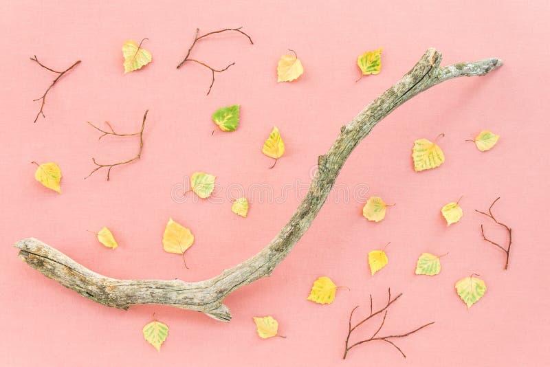 Folhas e ramo de árvore caídos no fundo do rosa pastel fotografia de stock