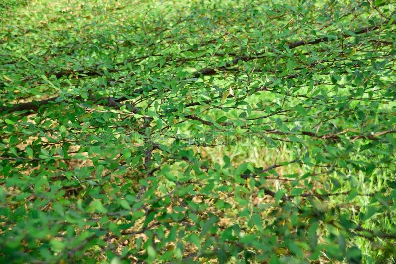 Folhas e ramos fotografia de stock royalty free