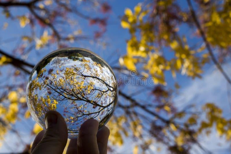 Folhas e ramos vermelhos amarelos do ouro com o céu azul capturado na reflexão da bola de vidro nos dedos imagem de stock