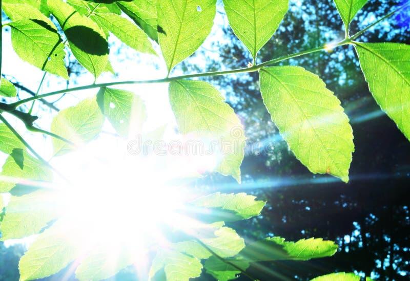 Folhas e sol foto de stock royalty free