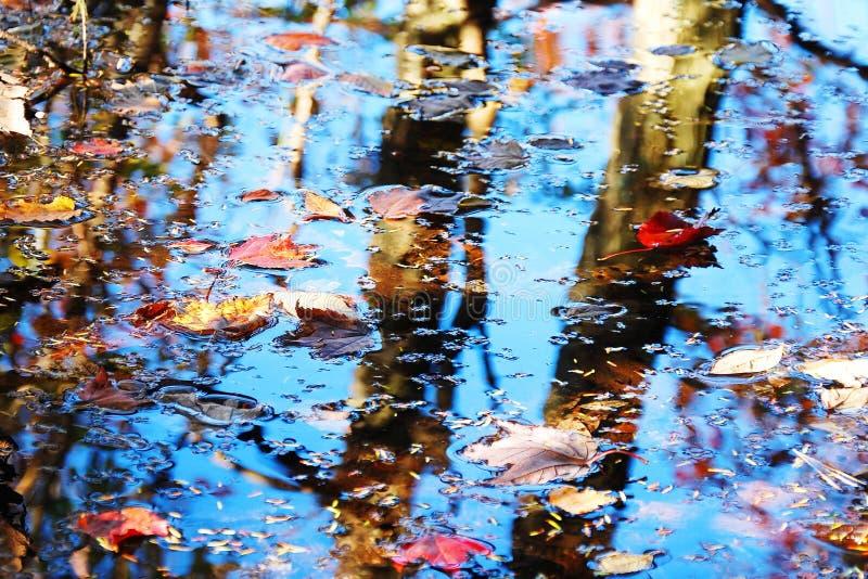 Folhas e textura da água foto de stock royalty free