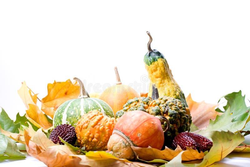 Folhas e vegetais das frutas imagens de stock royalty free