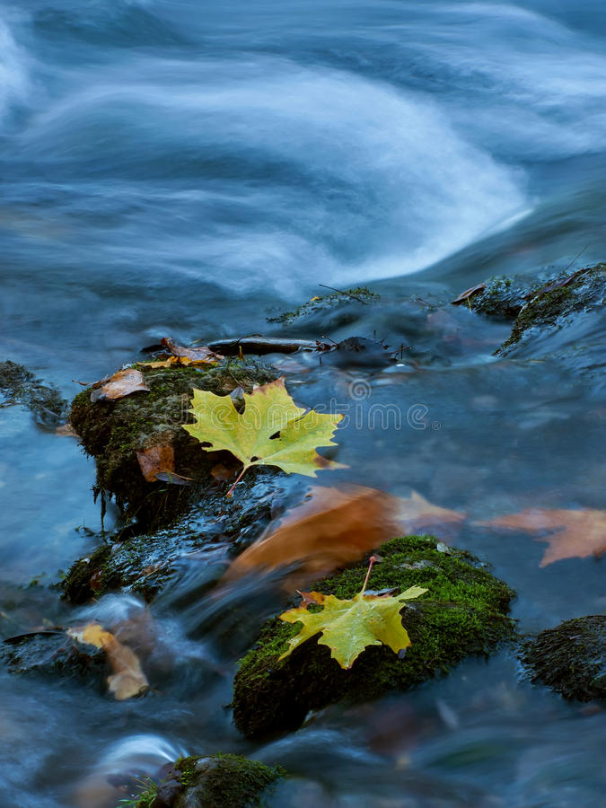 Folhas em The Creek 1 foto de stock royalty free