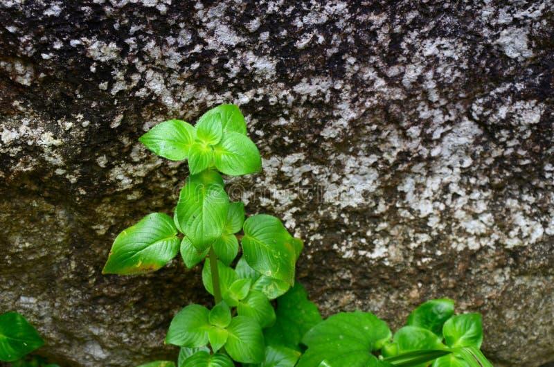 Folhas em rochas nas cachoeiras na floresta no de perto imagens de stock royalty free