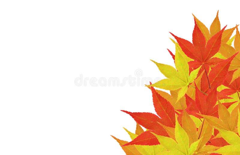Folhas em um canto imagem de stock