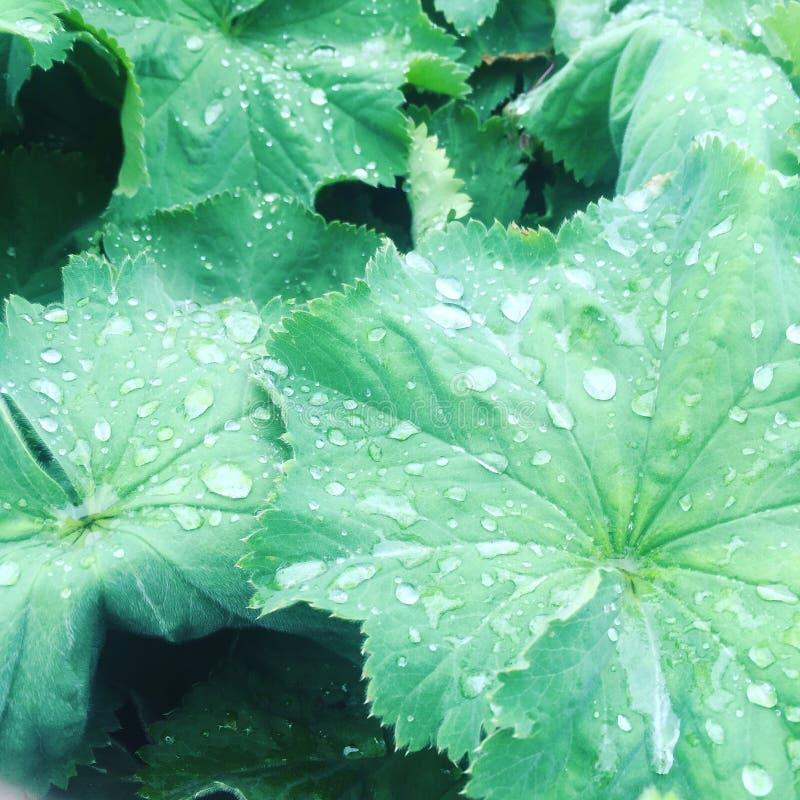 Folhas em um dia chuvoso fotografia de stock