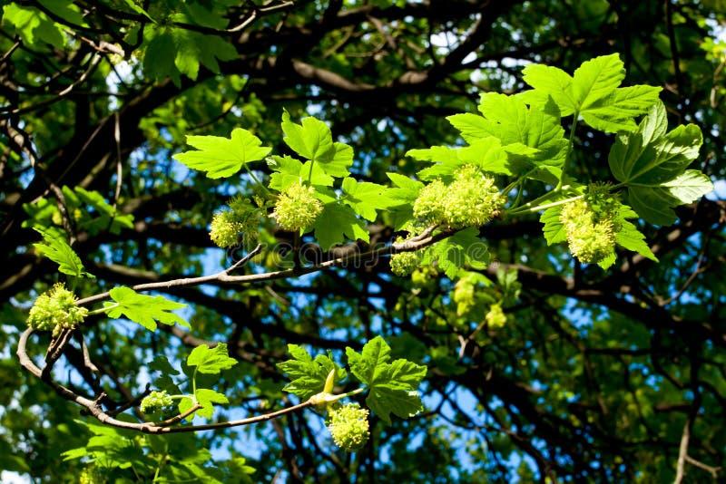 Folhas em uma árvore fotografia de stock royalty free