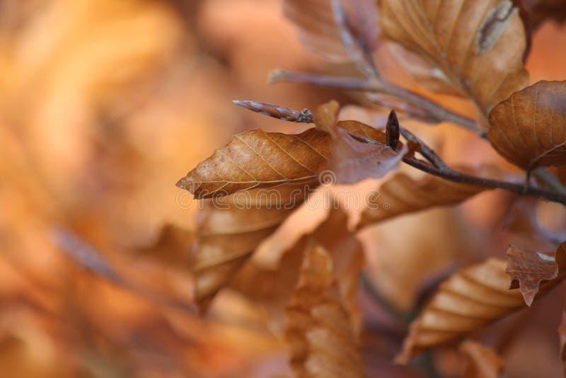 Folhas em uma árvore no outono fotografia de stock
