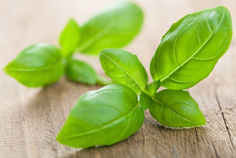 Folhas frescas da manjericão fotografia de stock royalty free