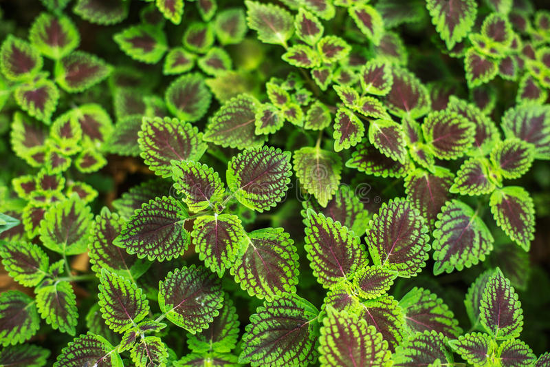 Download Folhas Frescas Da Planta No Fundo Do Jardim Foto de Stock - Imagem de foliage, filial: 65577926