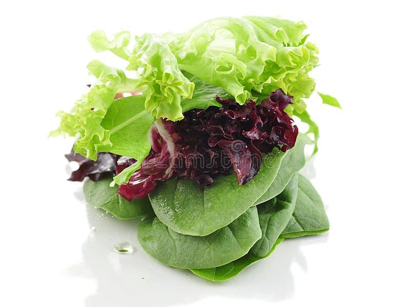 Folhas frescas da salada foto de stock