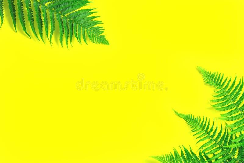 Folhas frescas da samambaia no fundo amarelo brilhante de incandesc?ncia fotos de stock royalty free