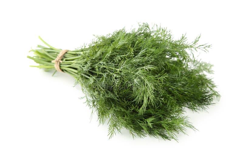 Folhas frescas do aneto imagens de stock royalty free