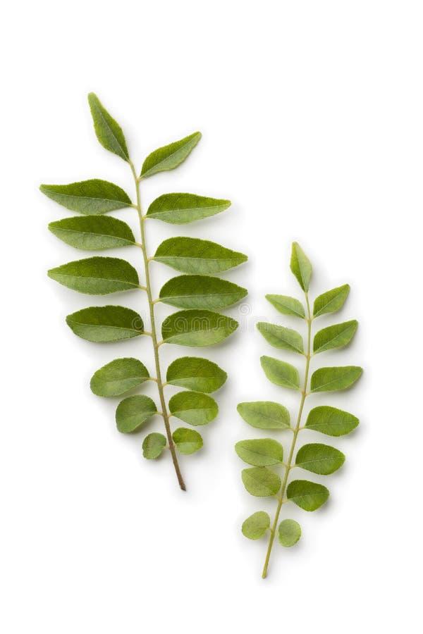 Folhas frescas do caril imagem de stock royalty free