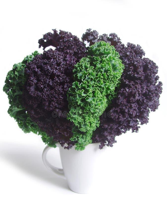 Folhas frescas do kale curly fotos de stock royalty free