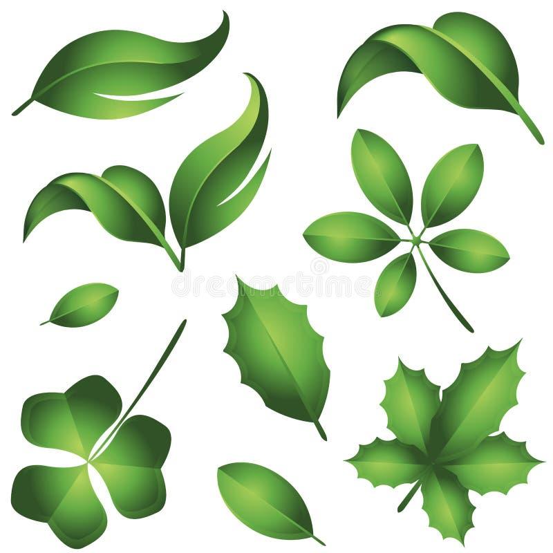 Folhas frescas do verde