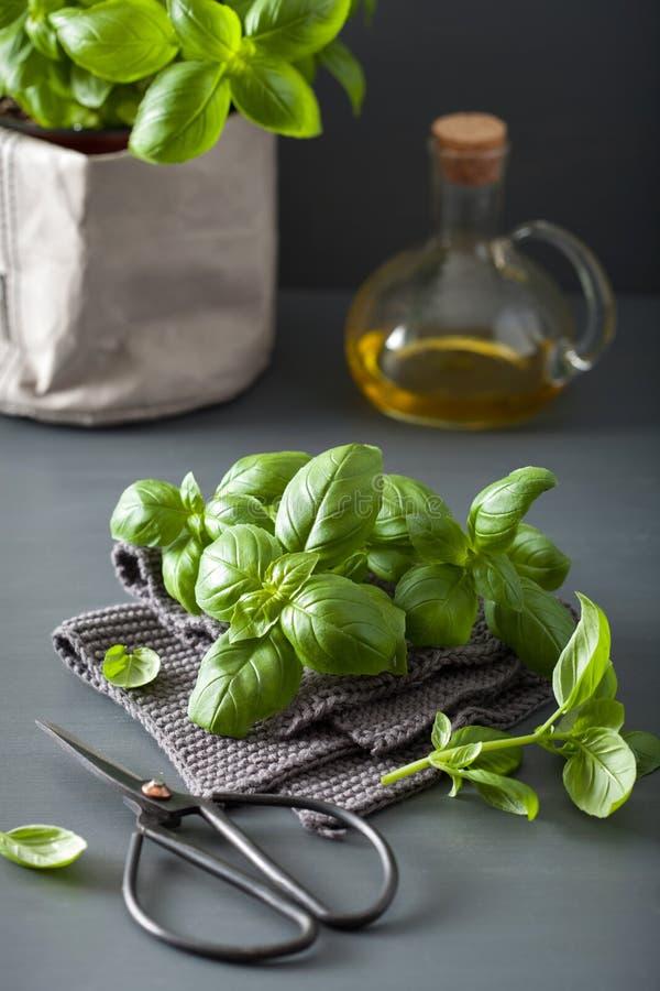 Folhas frescas do verde da erva da manjericão fotos de stock royalty free