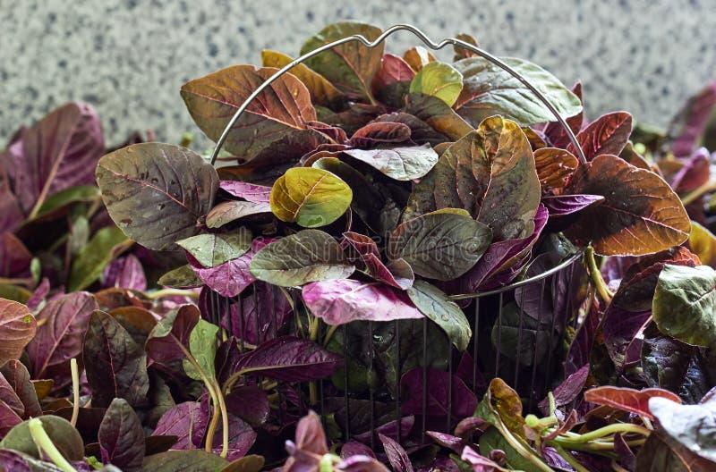 Folhas frescas dos espinafres vermelhos, amaranto na cesta de aço no montão do amaranto fotografia de stock royalty free