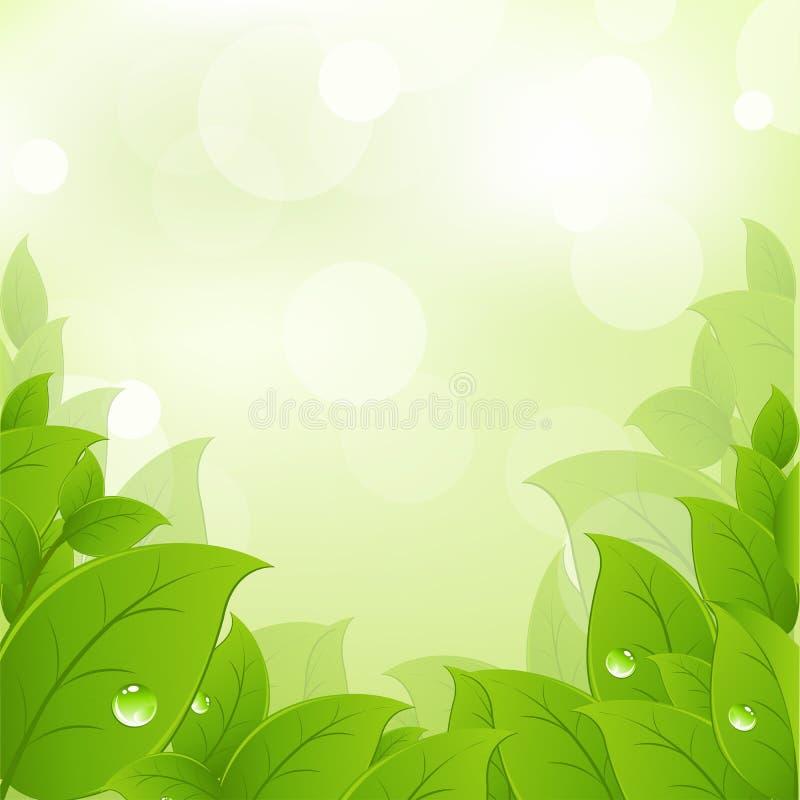 Folhas frescas e verdes ilustração do vetor