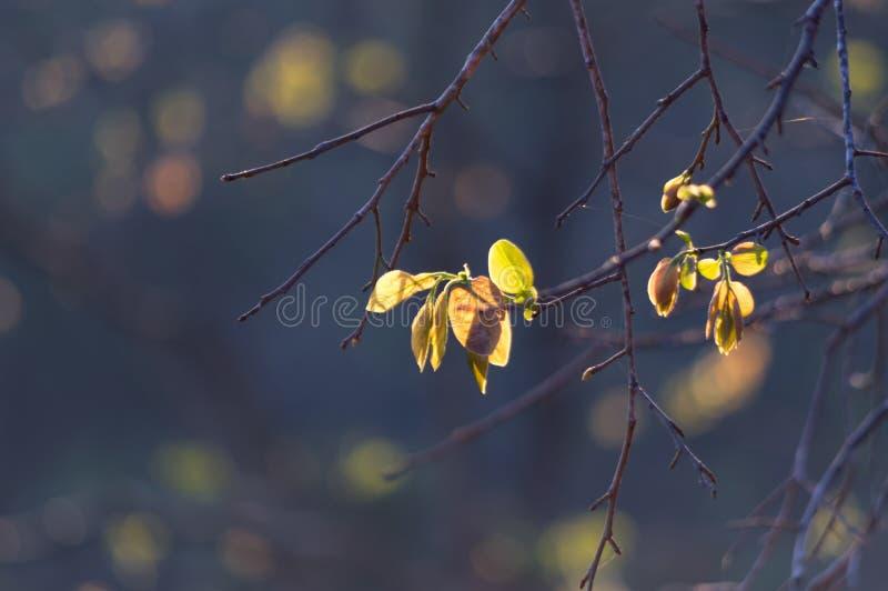 Folhas frescas na primavera fotografia de stock