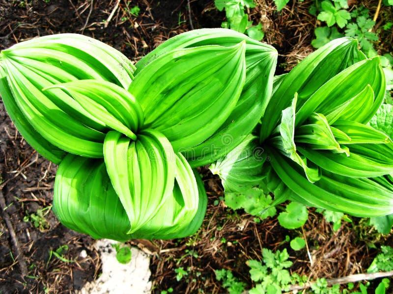 Folhas frescas verdes fotos de stock royalty free
