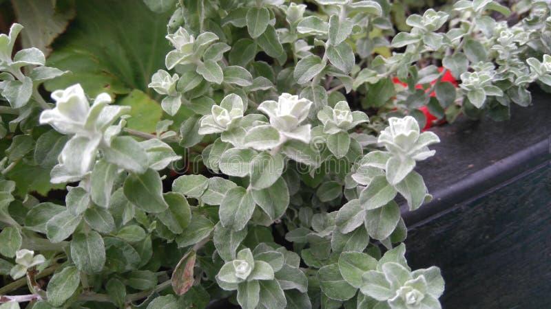 Folhas gelados macias do verde fotografia de stock royalty free