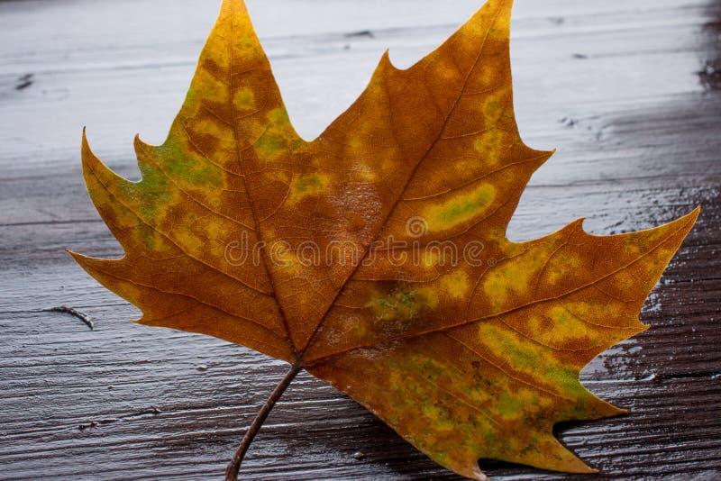 Folhas inoperantes no banco de madeira na água fotografia de stock