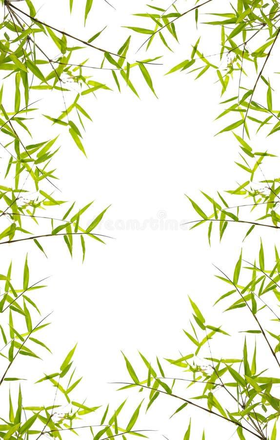 Folhas japonesas do bambu imagem de stock