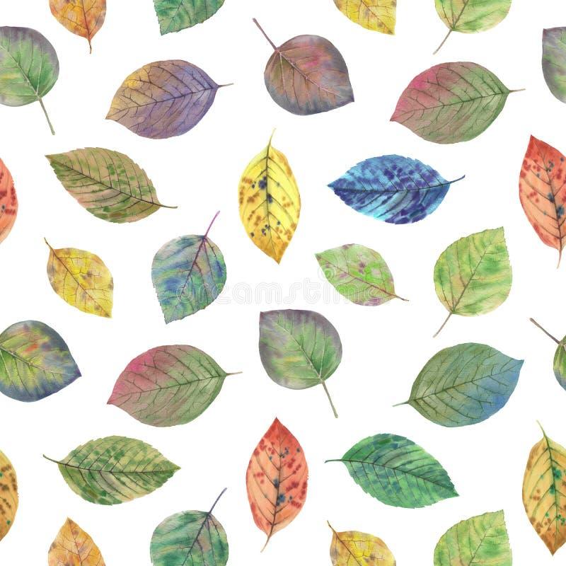 Folhas legantes para design Folhas coloridas do outono ilustração royalty free
